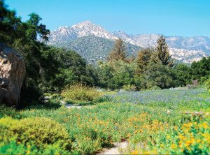 The Meadow at The Santa Barbara Botanic Garden
