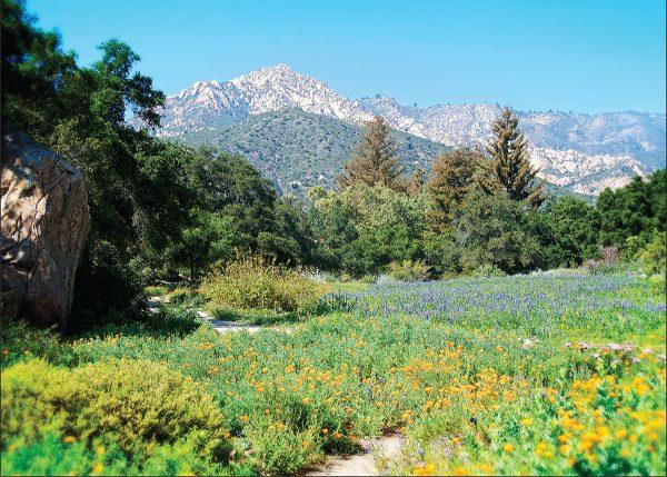 The Meadow Santa Barbara Botanic Garden Greeting Card Santa Barbara Greeting Cards