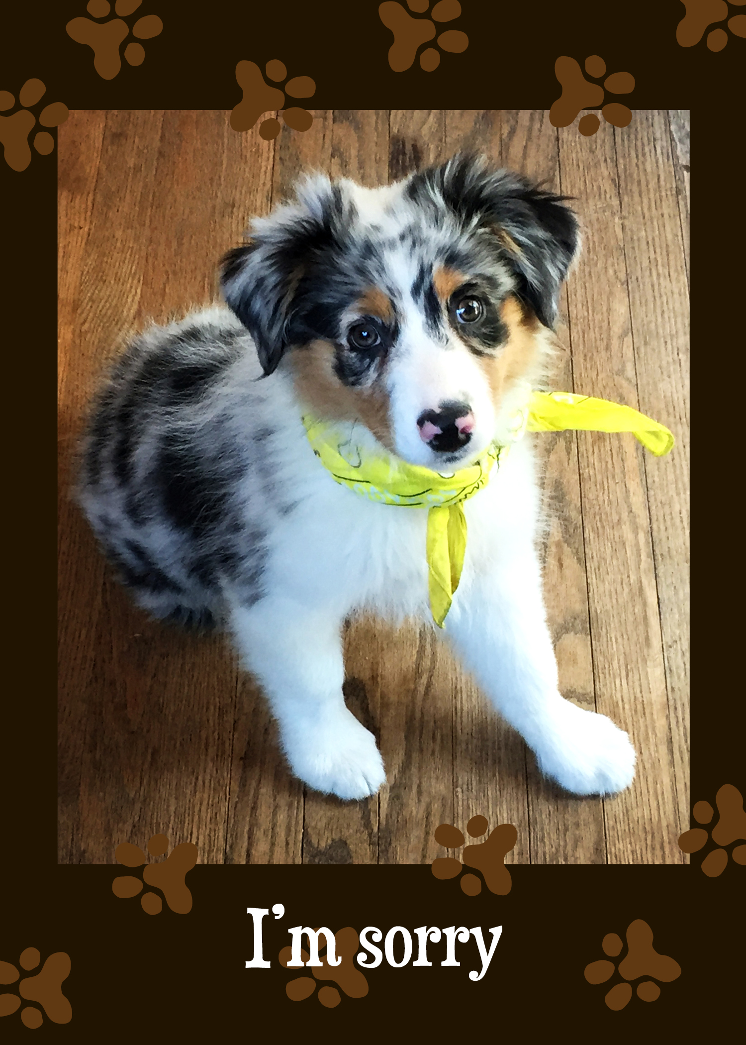 Apology Card Im Sorry Australian Shepherd Puppy Santa – Australian Birthday Cards Online