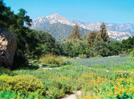 The Meadow at The Santa Barbara Botanic Garden