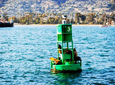 Sea lions resting on Buoy 3 in Santa Barbara