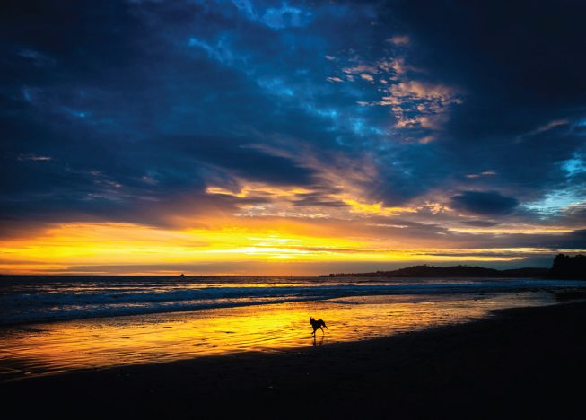 Dog in the surf, Butterfly Beach, Santa Barbara Greeting Cards
