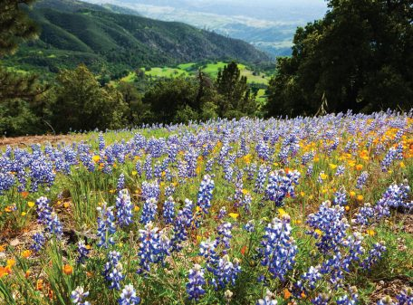 Wildflowers on Figueroa Mountain, Santa Ynez Valley, Santa Barbara Greeting Cards