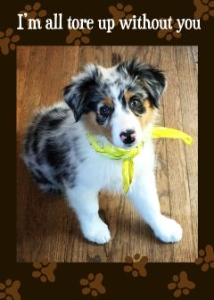 Miss You - Wish You Were Here - Australian Shepherd Puppy card