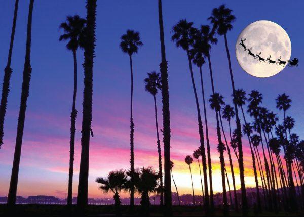 Christmas Palm Trees In Santa Barbara Holiday Card Santa Barbara