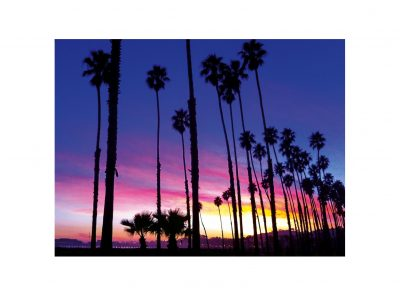 Palm Tree Sunset Notecard by Santa Barbara Greeting Cards