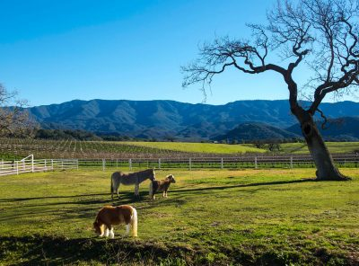 Christmastime in the Santa Ynez Valley - Santa Barbara Greeting Cards