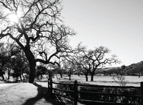 HappyCanyon in the Santa Ynez Valley